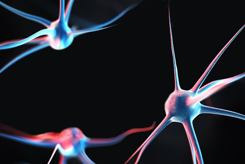 Brain Cells with Age-Related Memory Loss